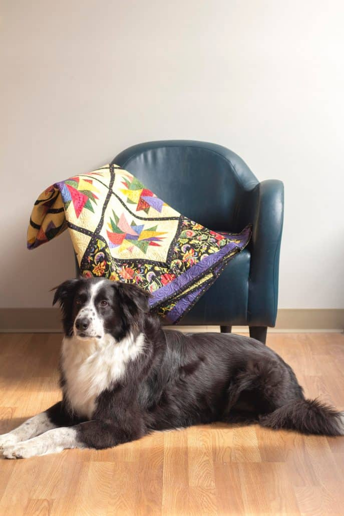 An English shepherd dog posing in front of a draped quilt at a t-shirt quilt shop